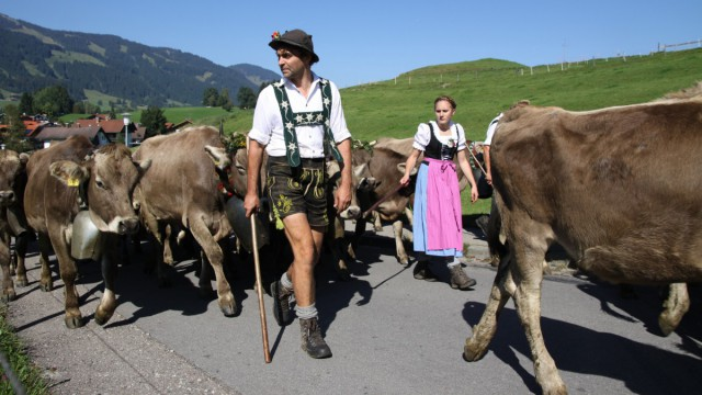 Viehscheid & Almabtrieb im Allgäu