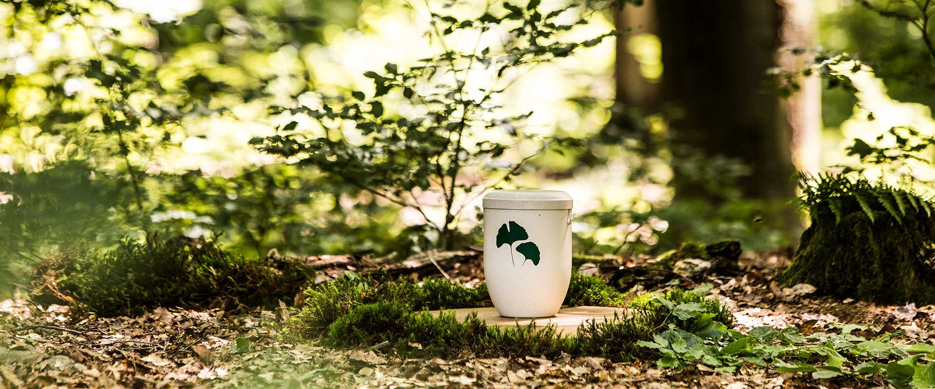 Wald-Naturbestattung