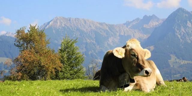 Allgäu - Natururlaub