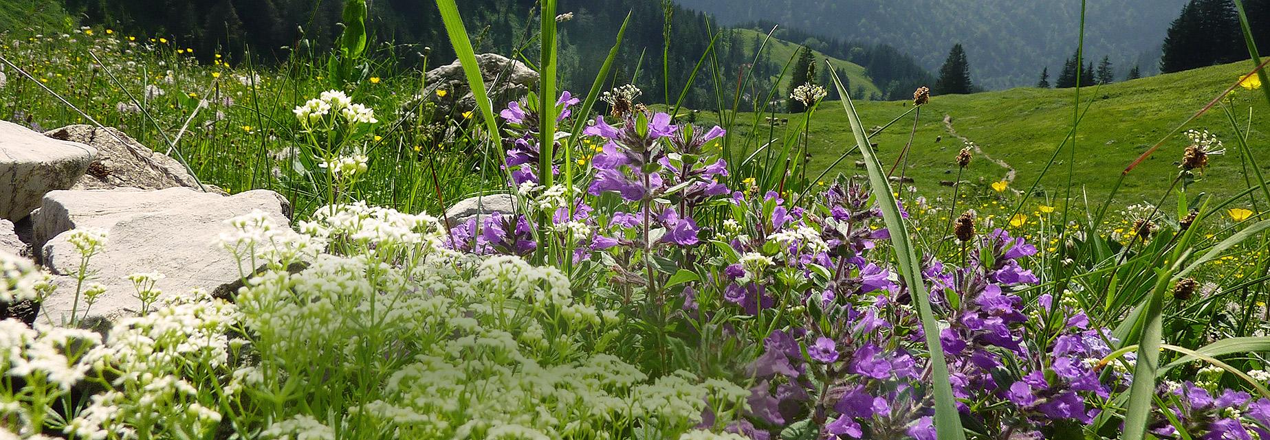 Sommerurlaub in Oberjoch