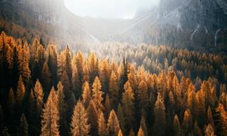 Jagden, Almhütten und Wälder sind beliebt wie eh und je