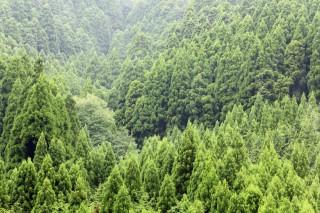 Warum Wald so wichtig ist!!!