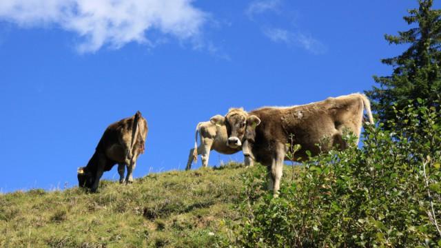 Ausflugsziele rund um in die Schwäbische Alb für Naturliebhaber