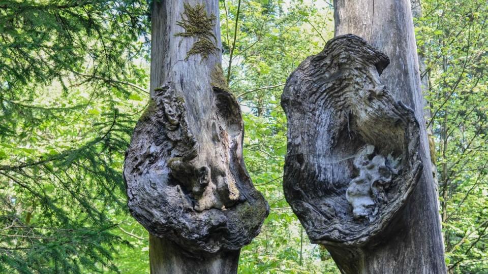 Weg der Sinne Baumstämme