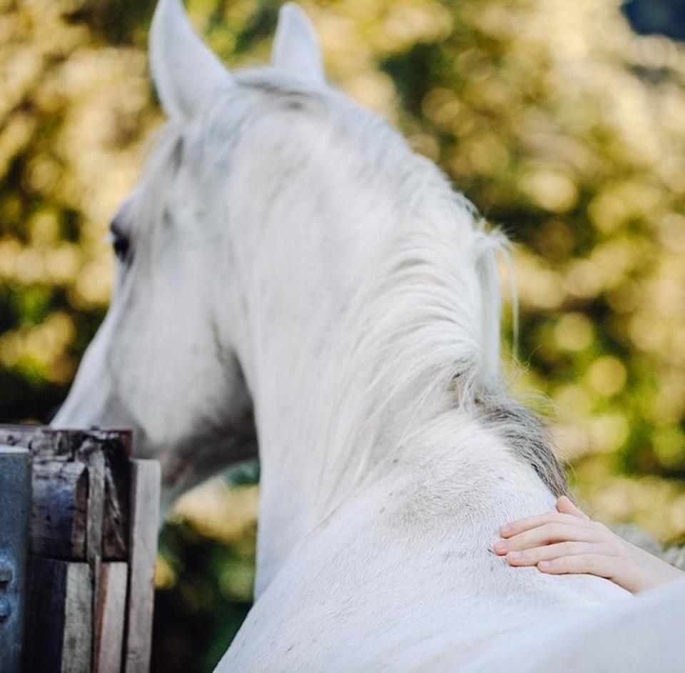 Das Therapie Pferd