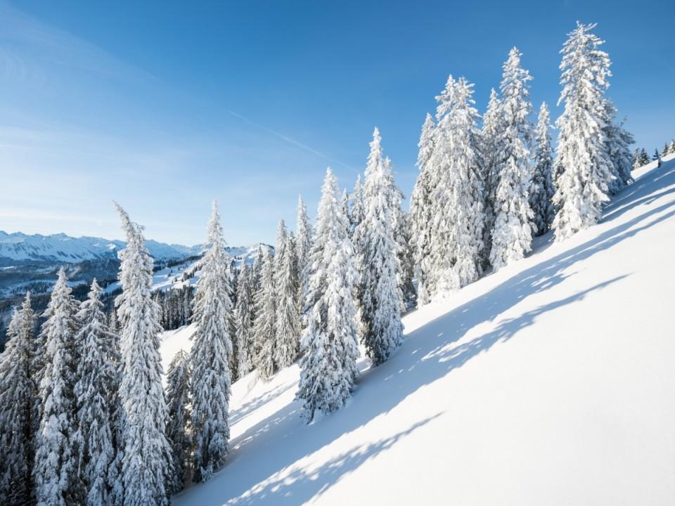 Schneebedeckte Berge mit Tannen