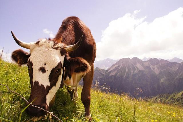 Das Allgäu: Natur- und Urlaubsparadies