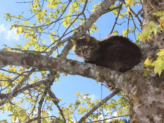 Katze in Baum