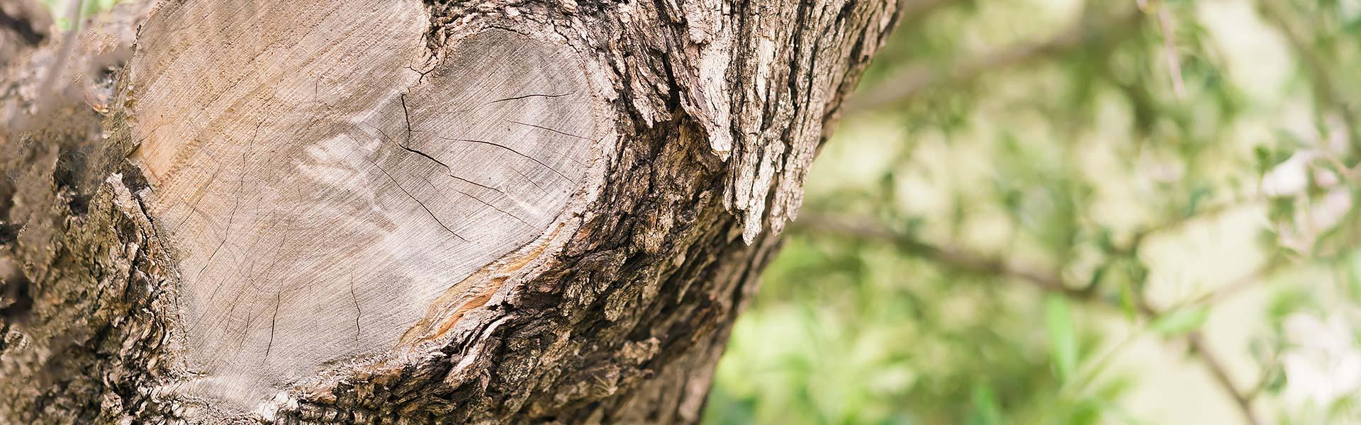 Holzbauunternehmen