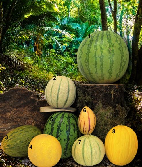 Melonen divers