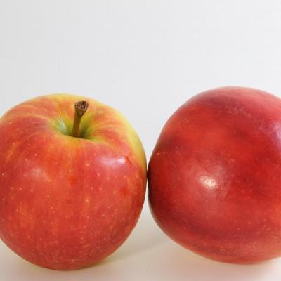 Obst - Apfel Elstar