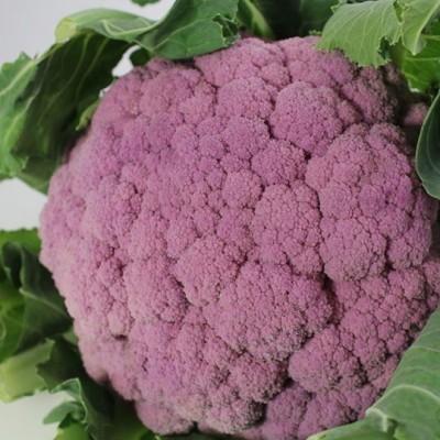 Gemüse - Blumenkohl violett