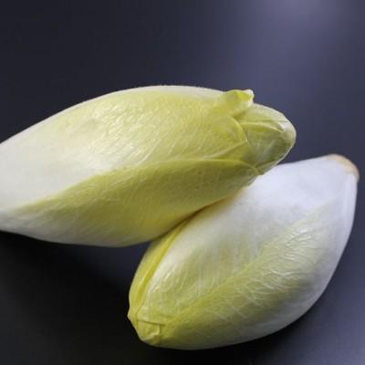 Gemüse - Chicoree
