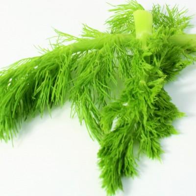 Gemüse - Fenchelgrün