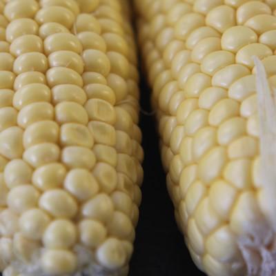 Gemüse - Maiskolben frisch