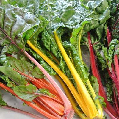 Gemüse - Mangold bunt