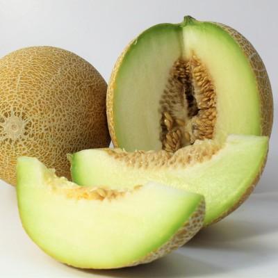 Obst - Melone Galia