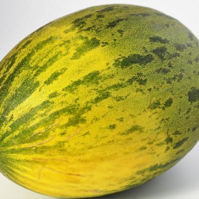 Obst - Melone Piel de Sapo