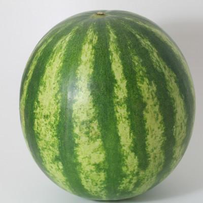 Obst - Melone Wasser kernarm