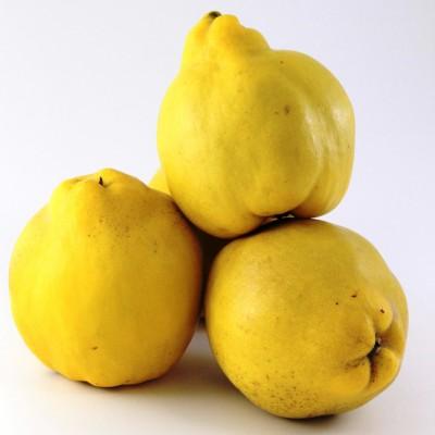 Obst - Quitten