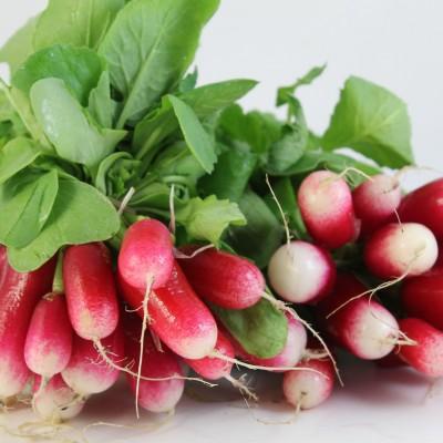 Gemüse - Radieser rot-weiss