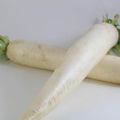 Gemüse - Rettich
