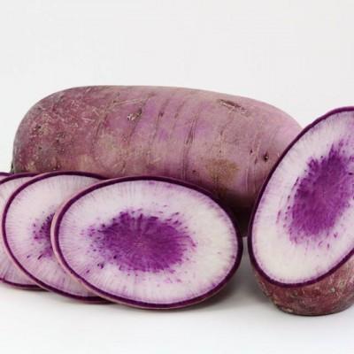 Gemüse - Rettich Blue Skin