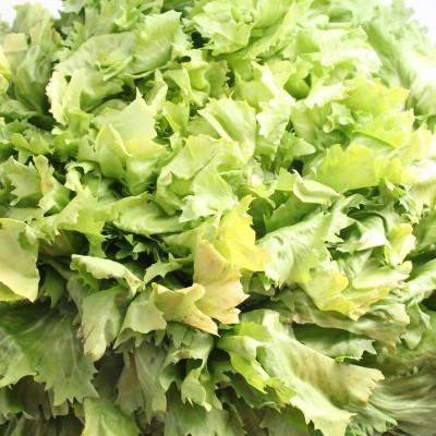 Gemüse - Salat Escarol