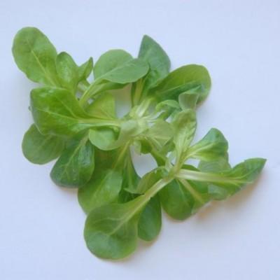 Gemüse - Salat Feld