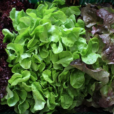 Gemüse - Salat Mix
