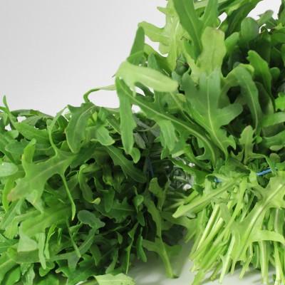 Gemüse - Salat Rucola