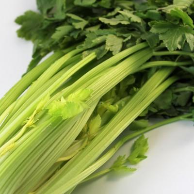 Gemüse - Sellerie Stauden