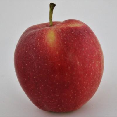Obst - Apfel Gala Royal