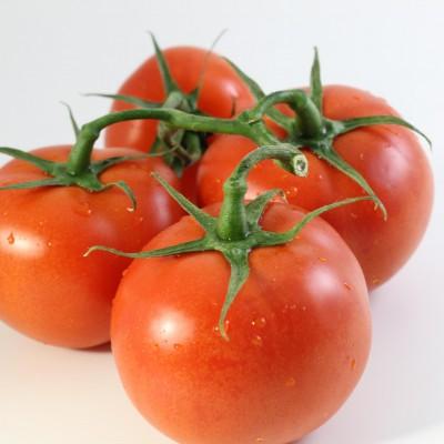 Gemüse - Tomaten Strauch