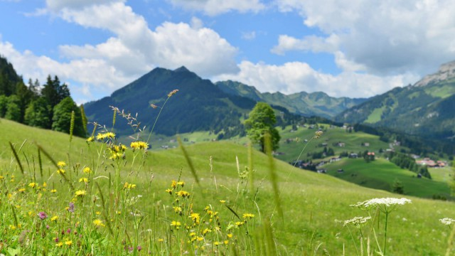 Sommerlandschaft mit Bergblick