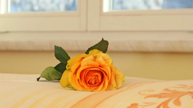 Rose auf dem Bett